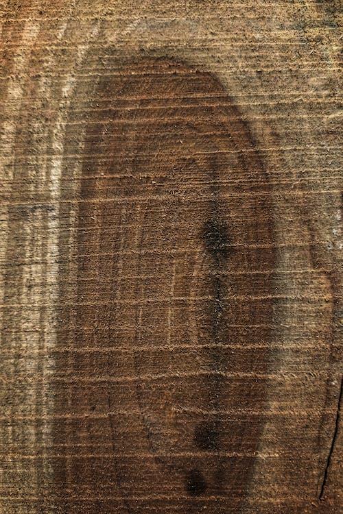Immagine gratuita di boschi di fuoco, fotografia mobile, legna che brucia