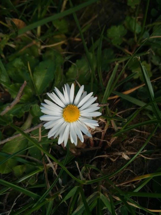 Foto Stok Gratis Tentang Bunga Aster Bunga Bunga Indah