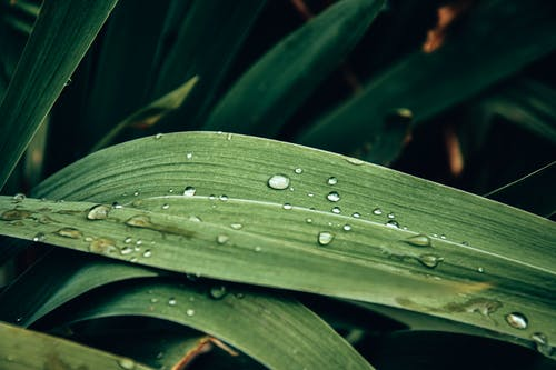 Close-Up Photo of a Plant's Leaves with Water Droplets