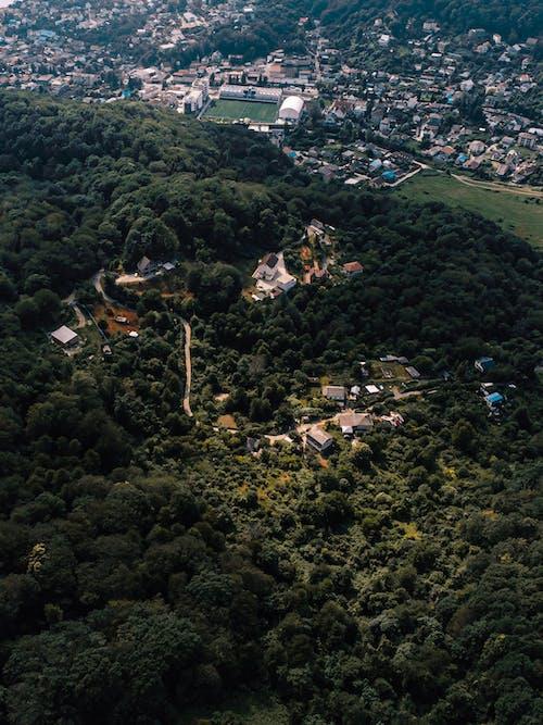 açık hava, ada, ağaç içeren Ücretsiz stok fotoğraf