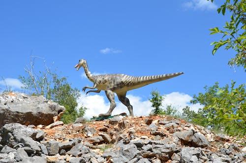 Darmowe zdjęcie z galerii z croacia, dinosaurio, funtana