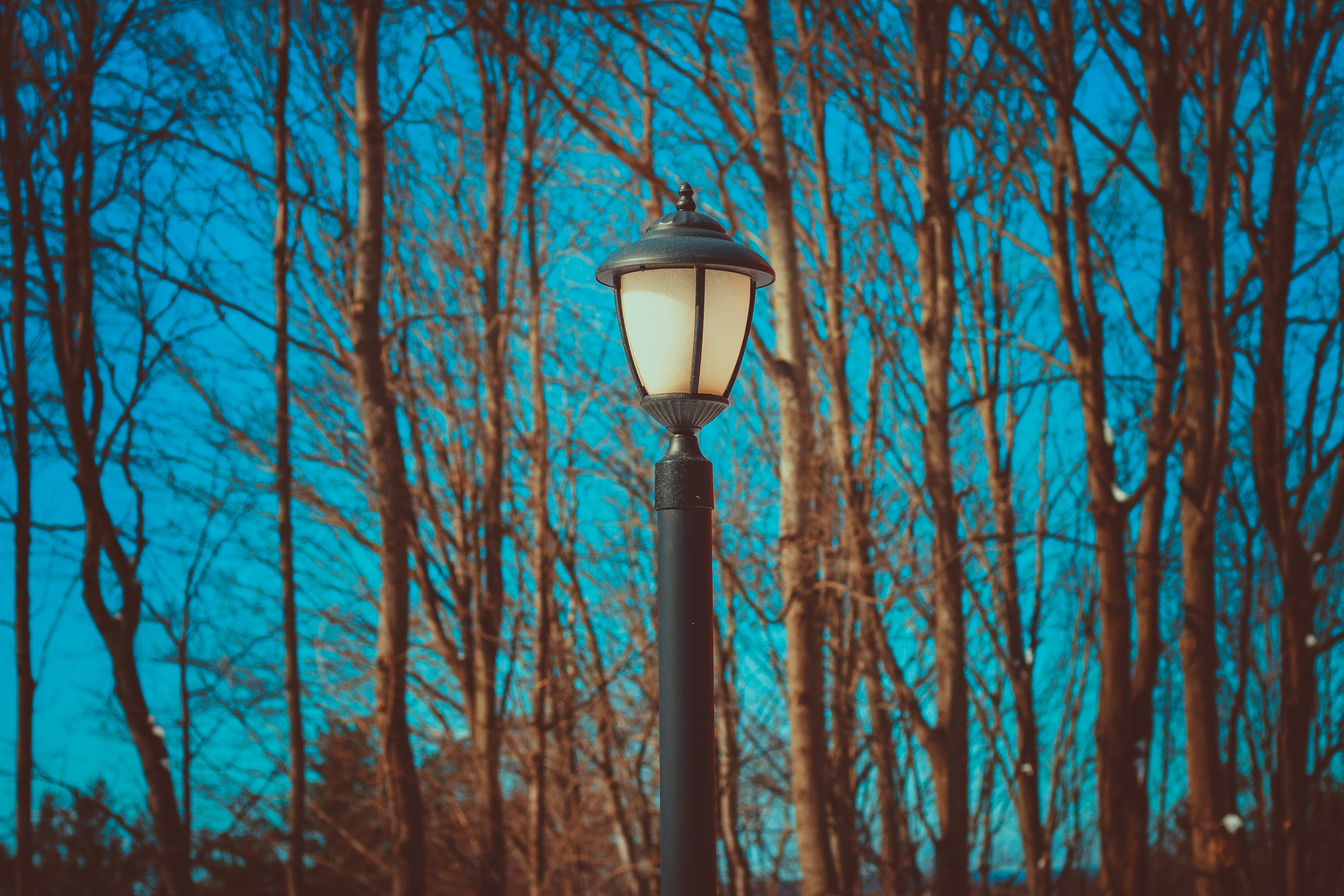 Black Lamp Post Near Leafless Trees