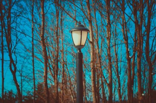 Gratis lagerfoto af dagslys, grene, landskab, lygtepæl