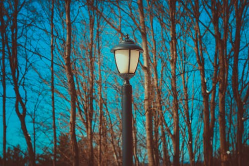 Kostnadsfri bild av dagsljus, grenar, landskap, ljus