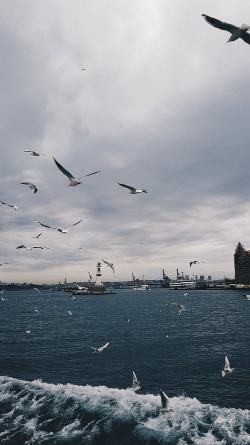 Základová fotografie zdarma na téma člun, denní světlo, divočina, hejno ptáků