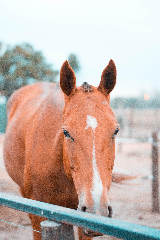 Kostenloses Stock Foto zu pferd, pferdekopf