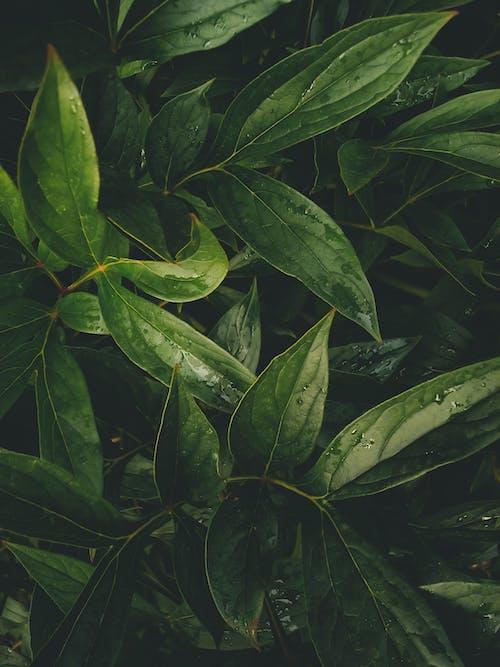 Overhead Shot of Wet Green Leaves