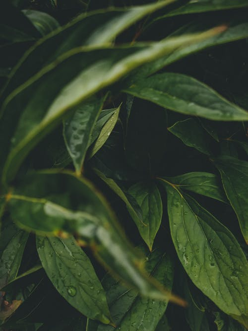 Wet Green Leaves in Close-Up Photography