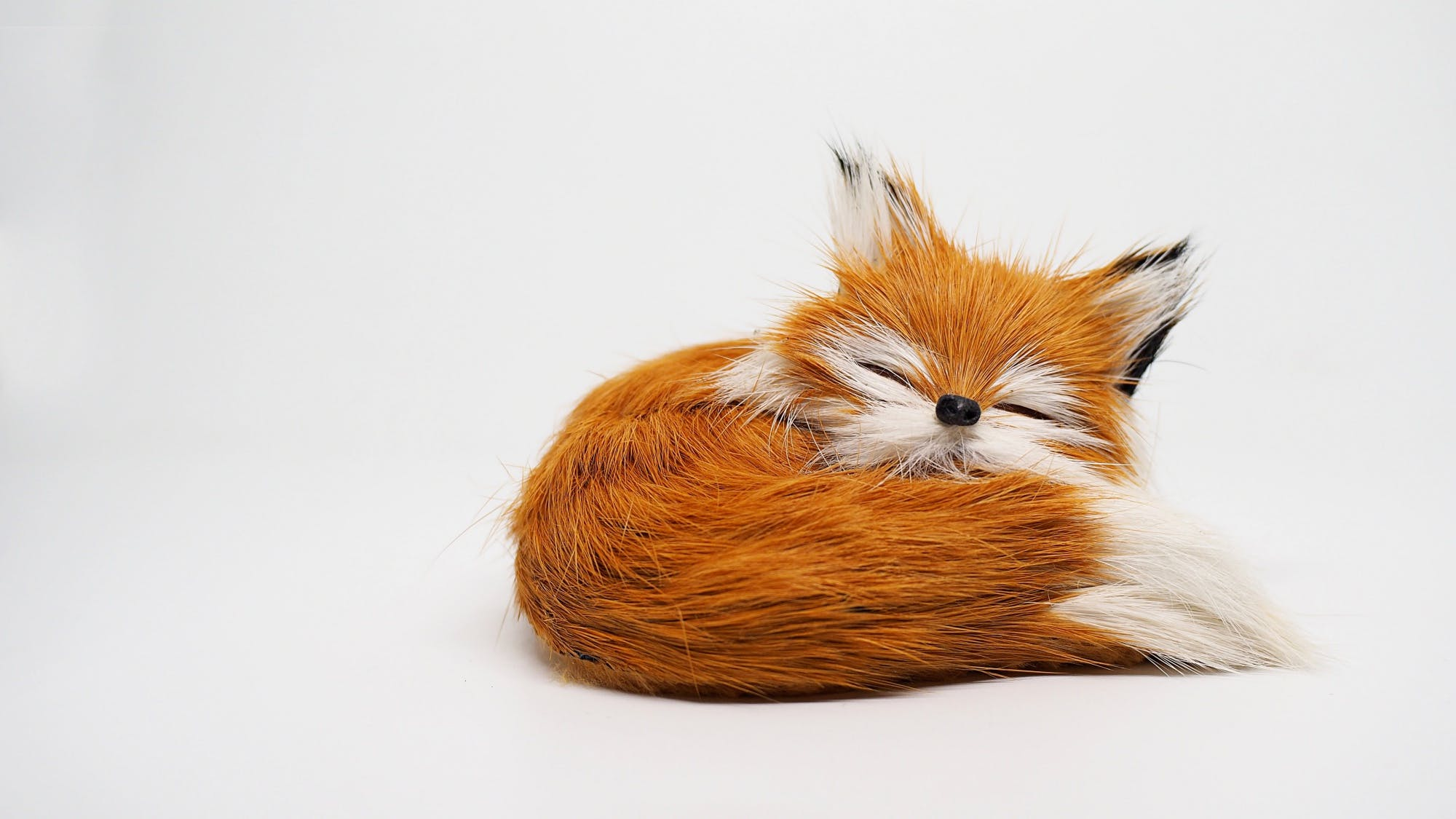 Free stock photo of doll, fox, little fox, white