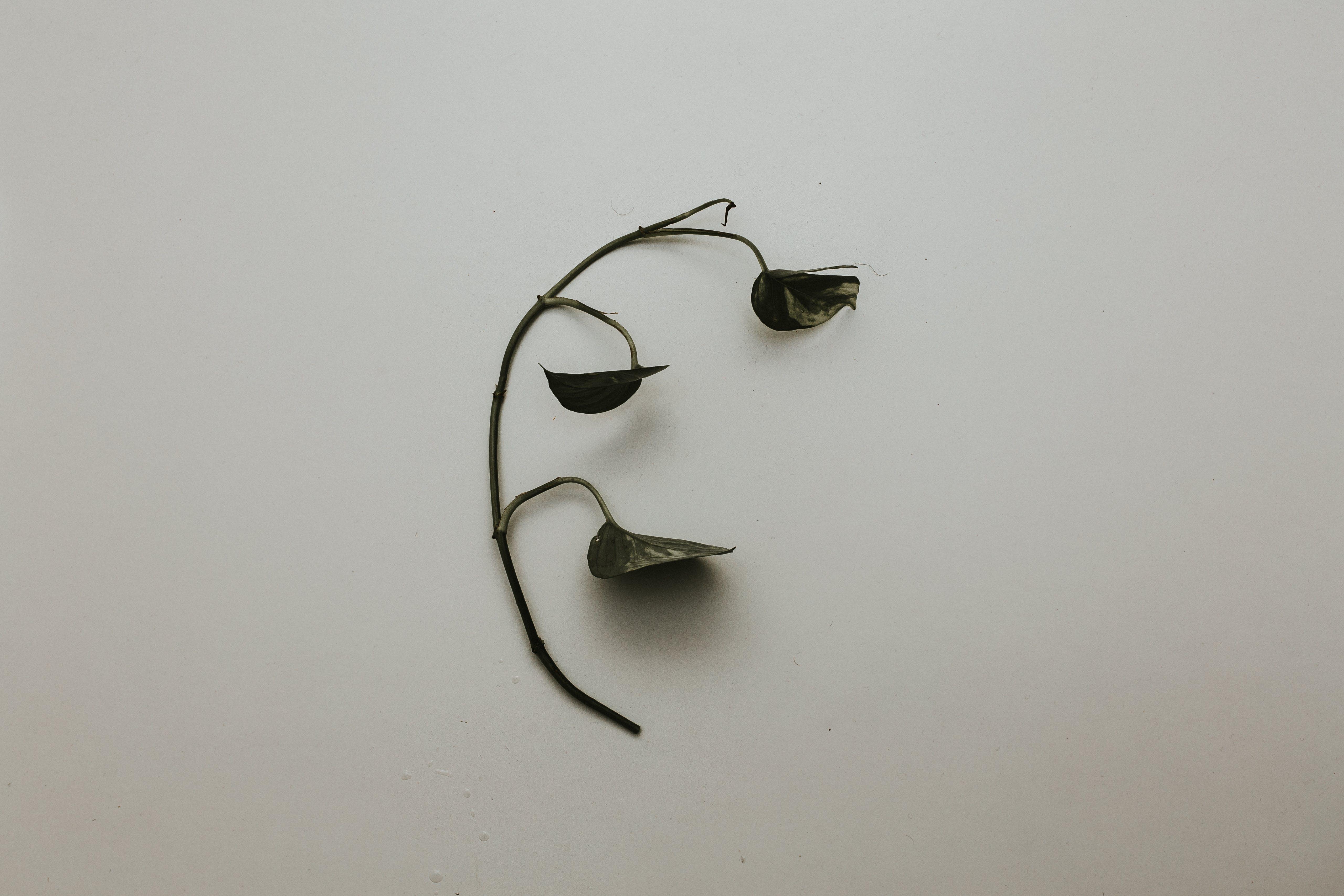 Gratis lagerfoto af hvid væg, plante, skygge, tørret