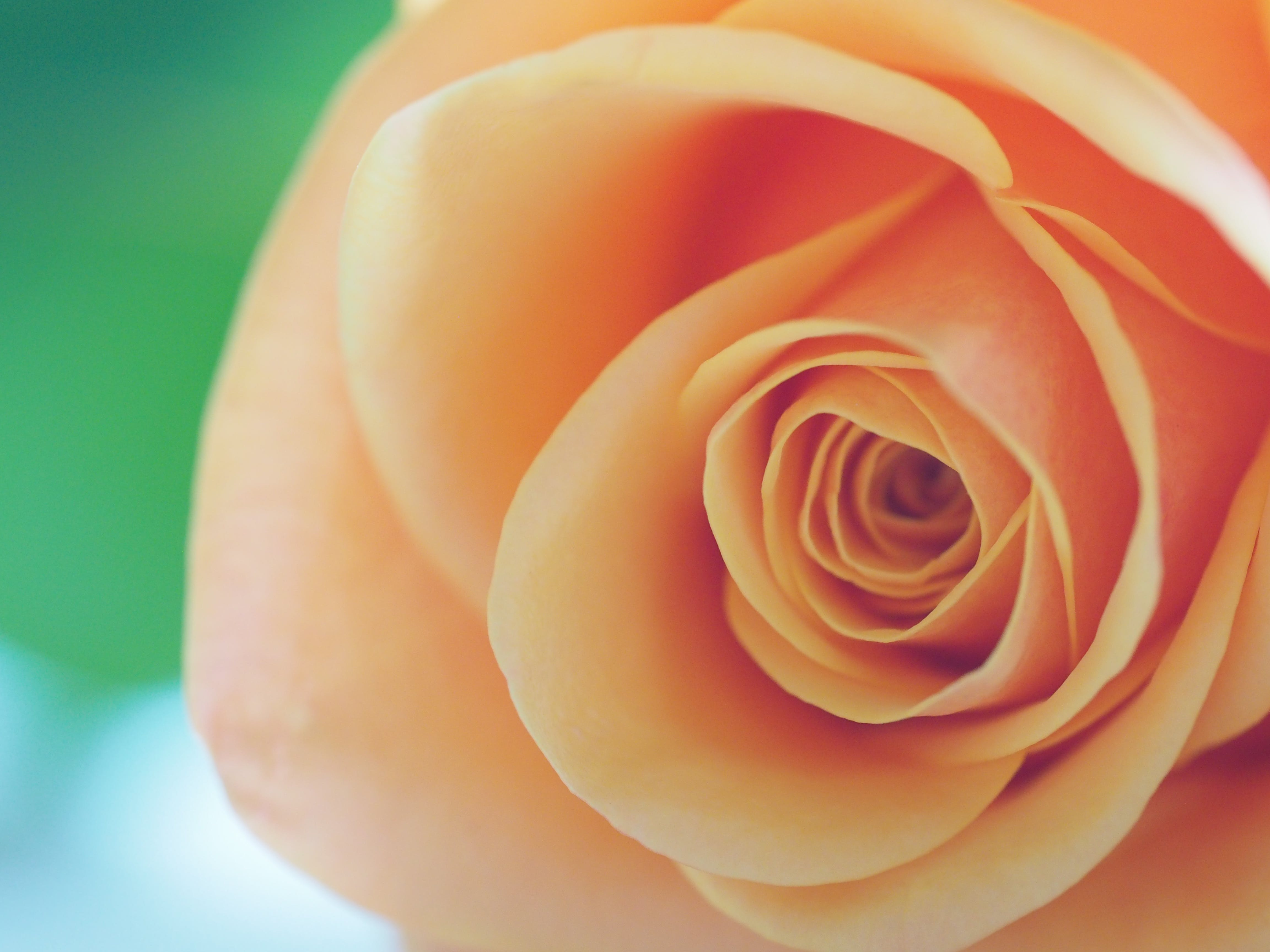 Free stock photo of nature, love, blur, orange