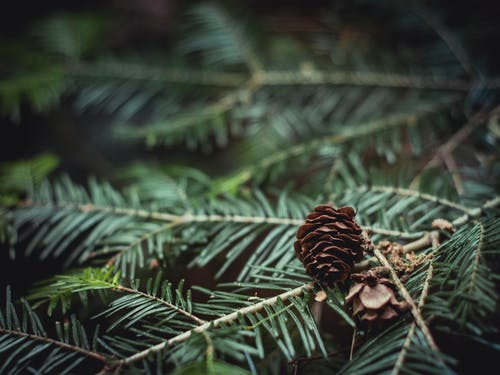 Close-Up Photography of Brown Pine Cone on Green Leaves