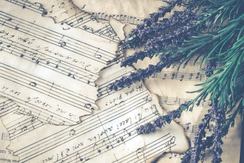 Ilmainen kuvapankkikuva tunnisteilla kasvikunta, kukinta, kukka, laventeli