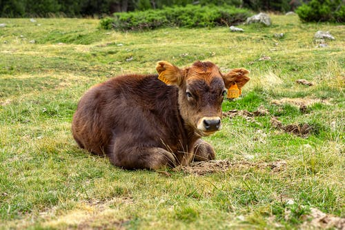 arazi, büyükbaş hayvanlar, Çiftlik içeren Ücretsiz stok fotoğraf
