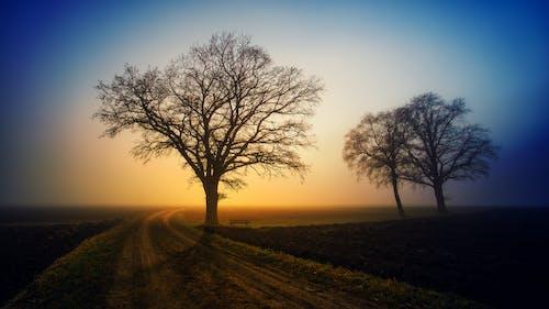 Безкоштовне стокове фото на тему «висохлий, голих дерев, голі дерева»
