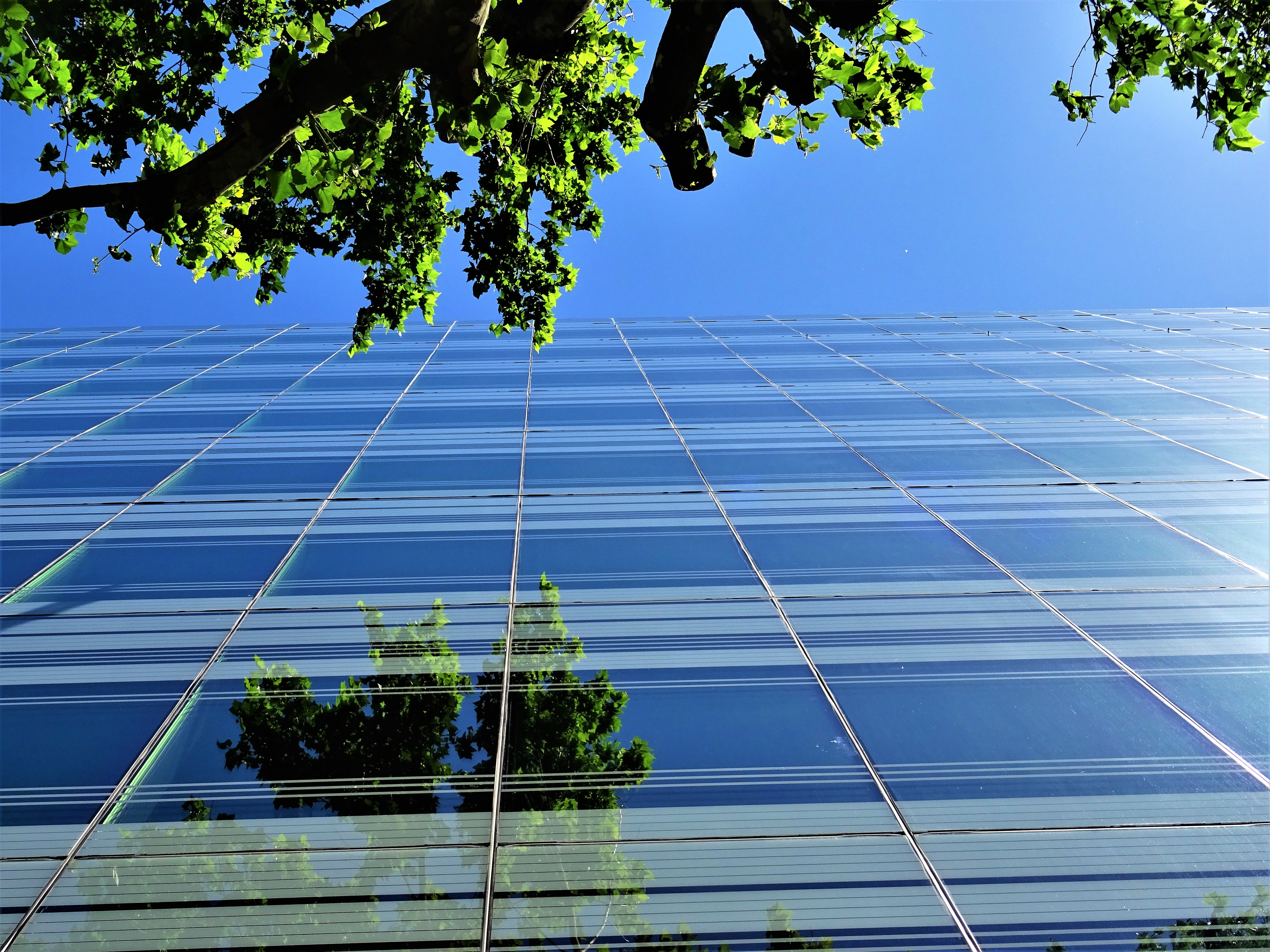 Low Angle Photography of Building Near Tree