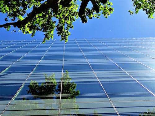 Foto profissional grátis de alto, arranha-céu, árvore, construção
