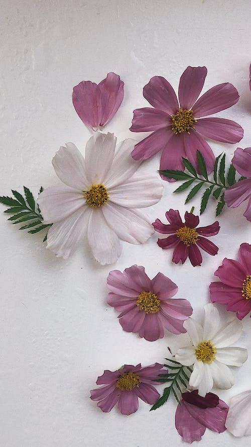 Immagine gratuita di avvicinamento, bellezza nella natura, colore bianco