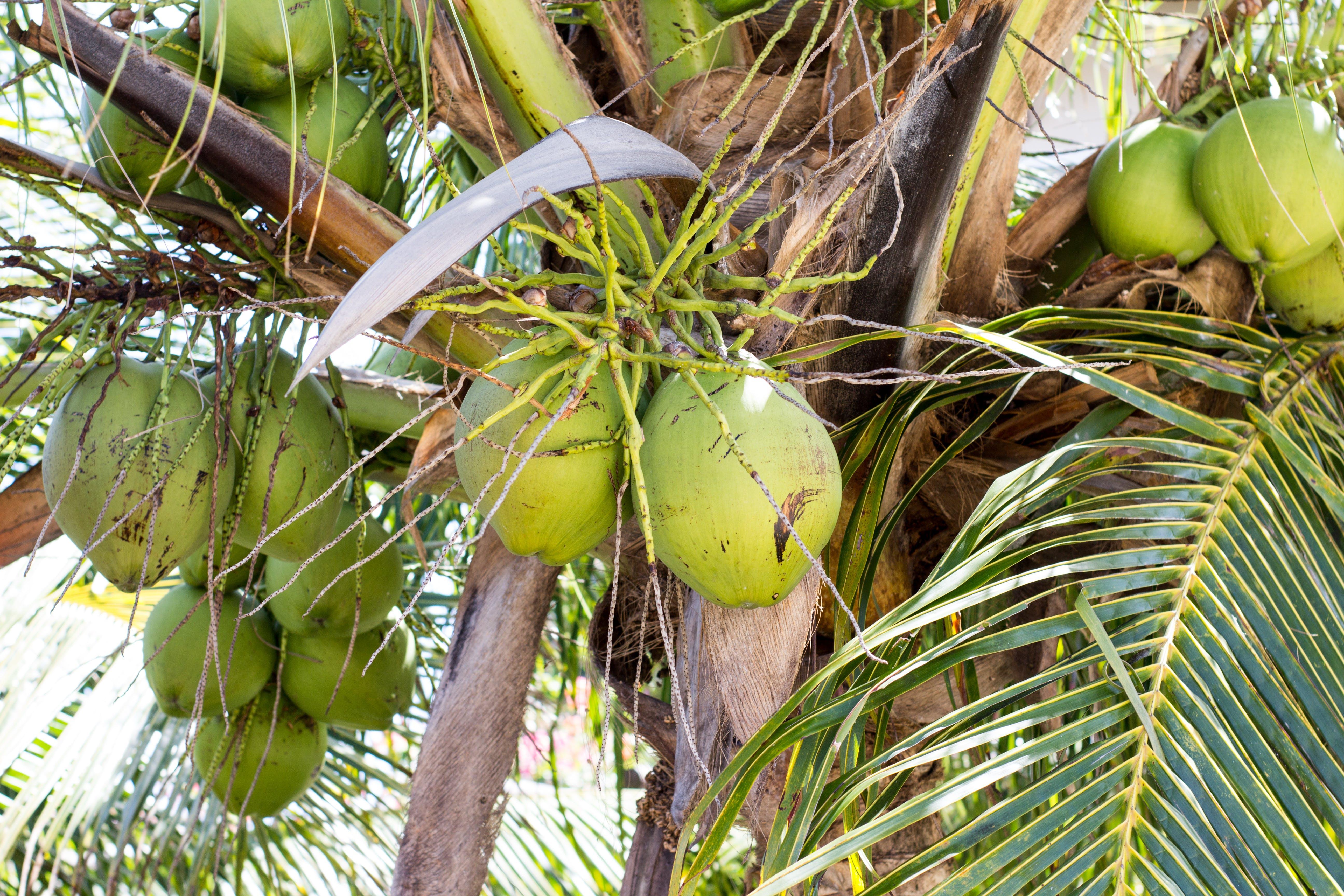 Free stock photo of brazil, cocoa, jungle