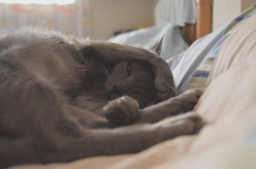 Photos gratuites de animaux mignons, chat, dormir, mignon