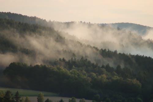 Fog on Tree Tops