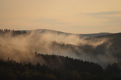 Foggy Tree tops Under White Sky