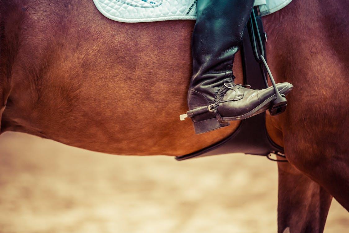Free stock photo of boot, horse, horseback riding
