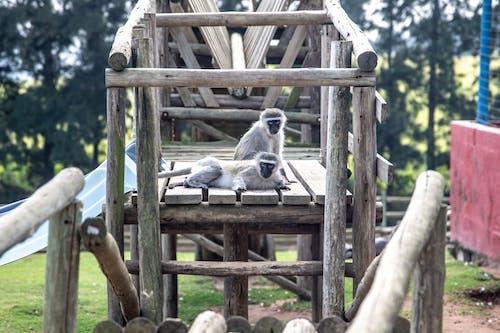 Ingyenes stockfotó állat, állatkert, állatok témában