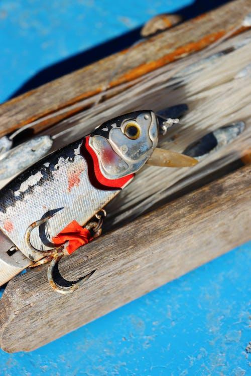 假鱼, 捕鱼网, 捕鱼装置 的 免费素材图片