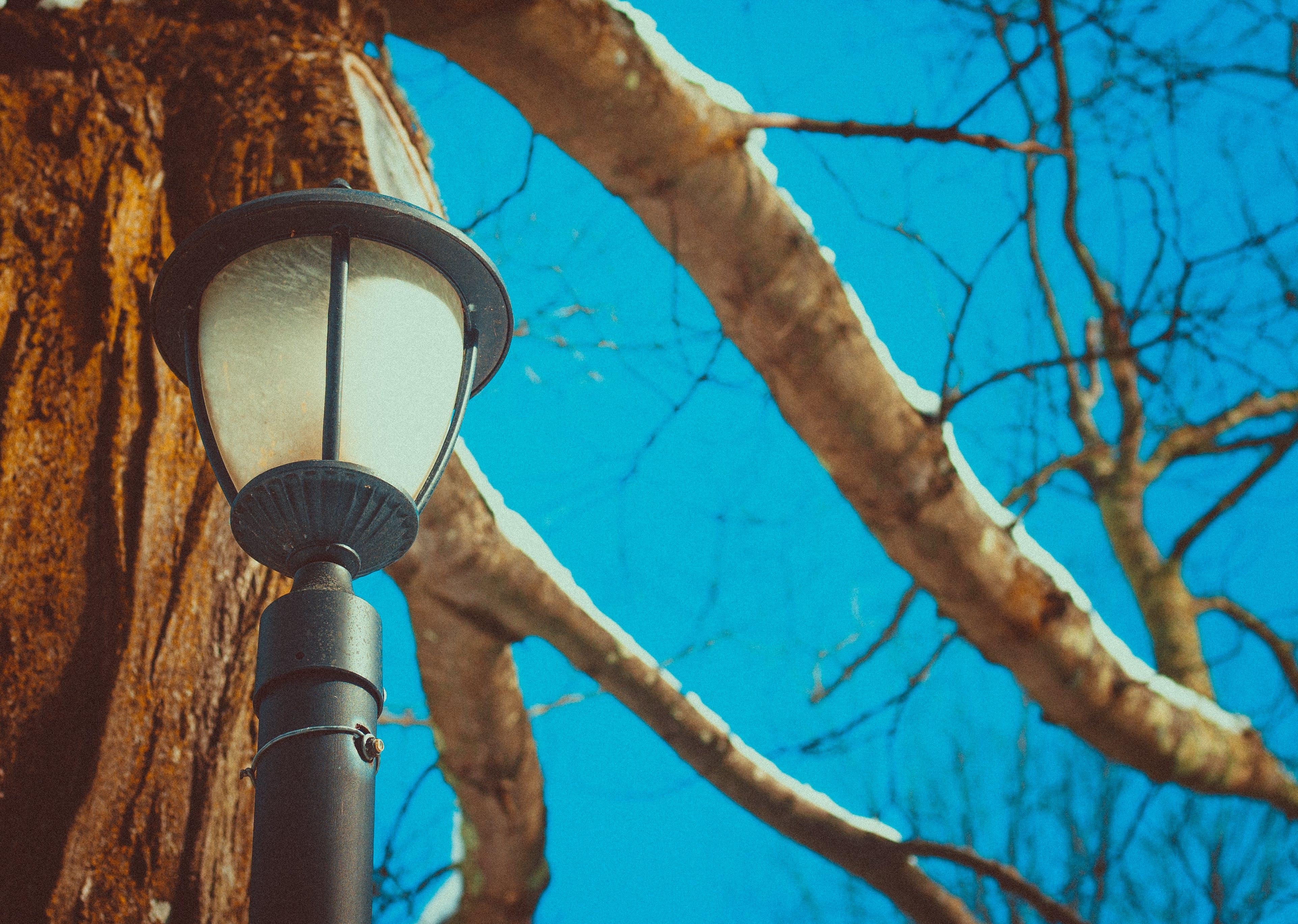 Black Post Lamp Near Tree