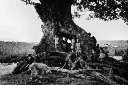 Grayscale Photography of Children Stands Near Tree