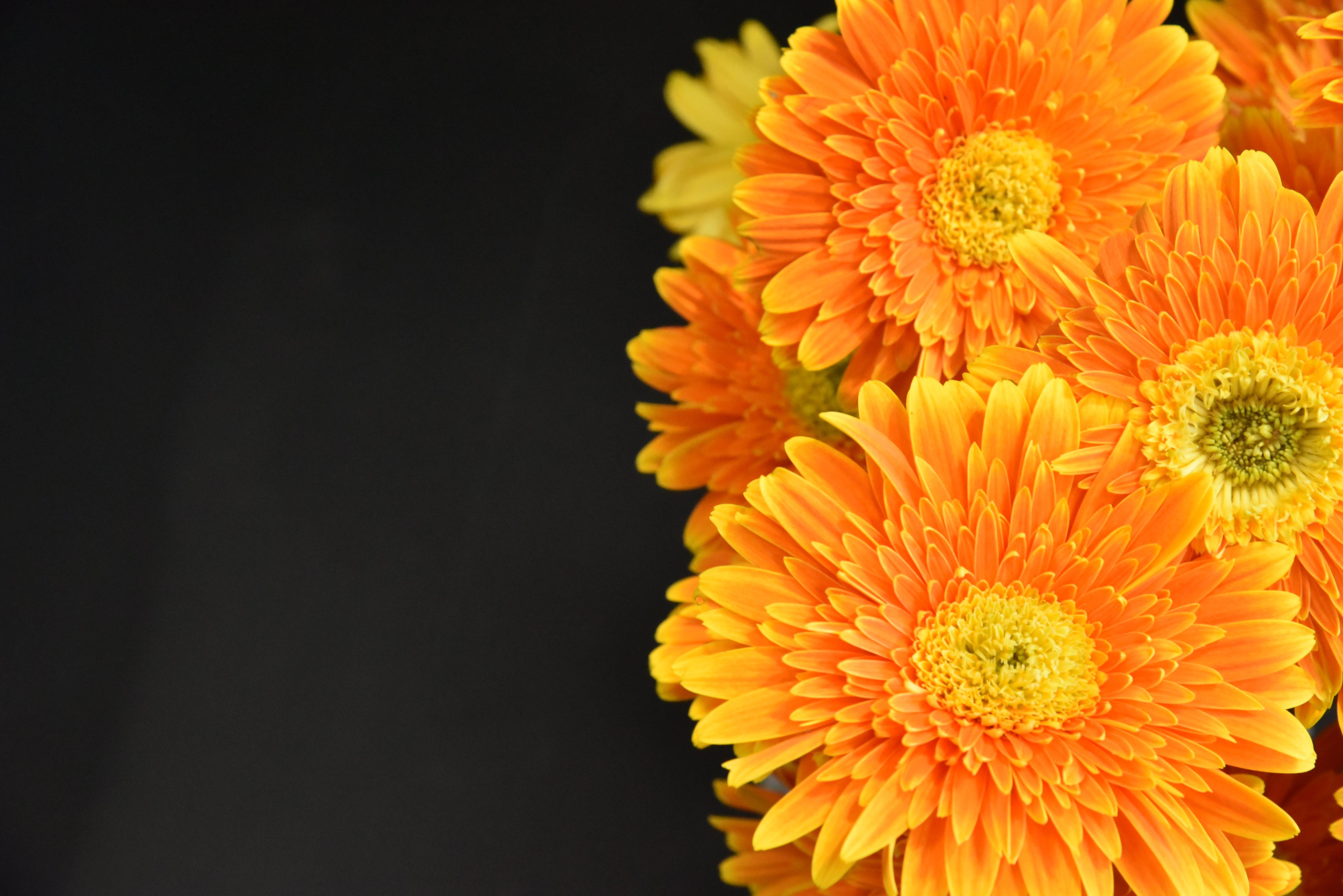 Macro Photography of Orange Flowers
