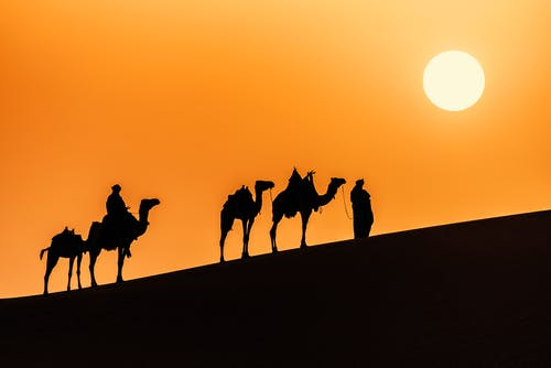 Silhouette of People Riding Camel during Sunset