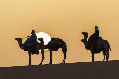 People Riding Camel on Desert