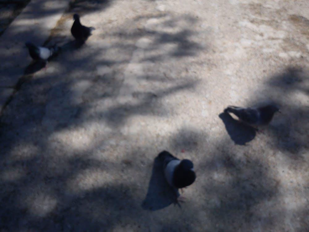 Free stock photo of birds, light, shadow
