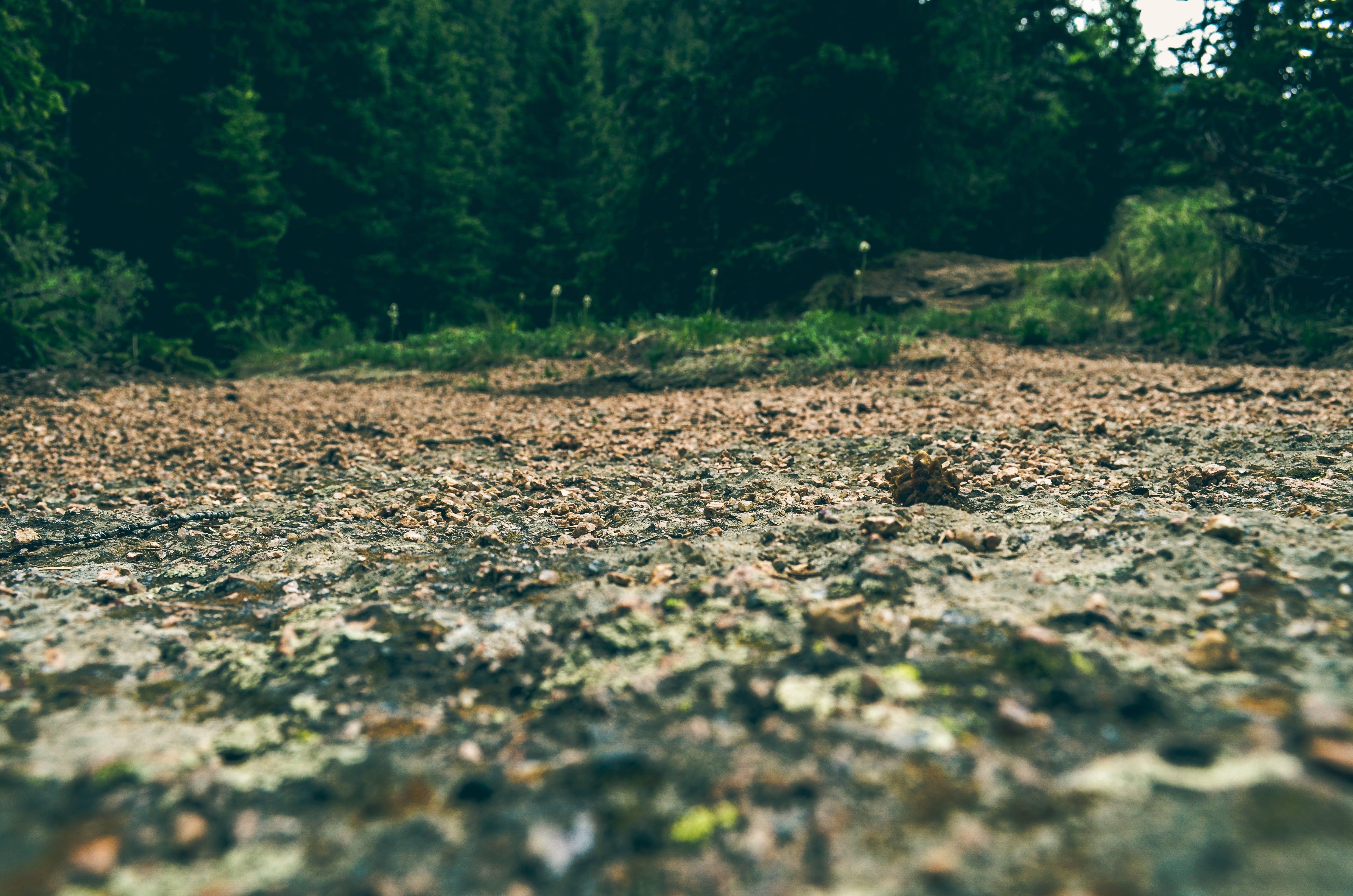 Brown Soil Near Green Trees