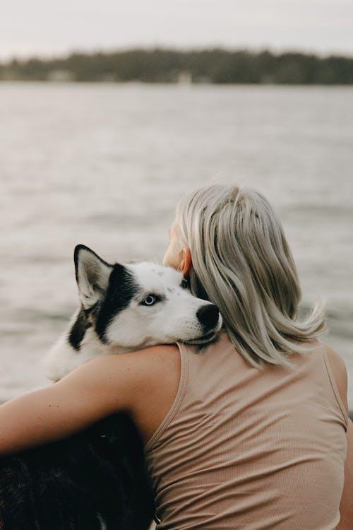 Fotos de stock gratuitas de abrazando, adorable, canino