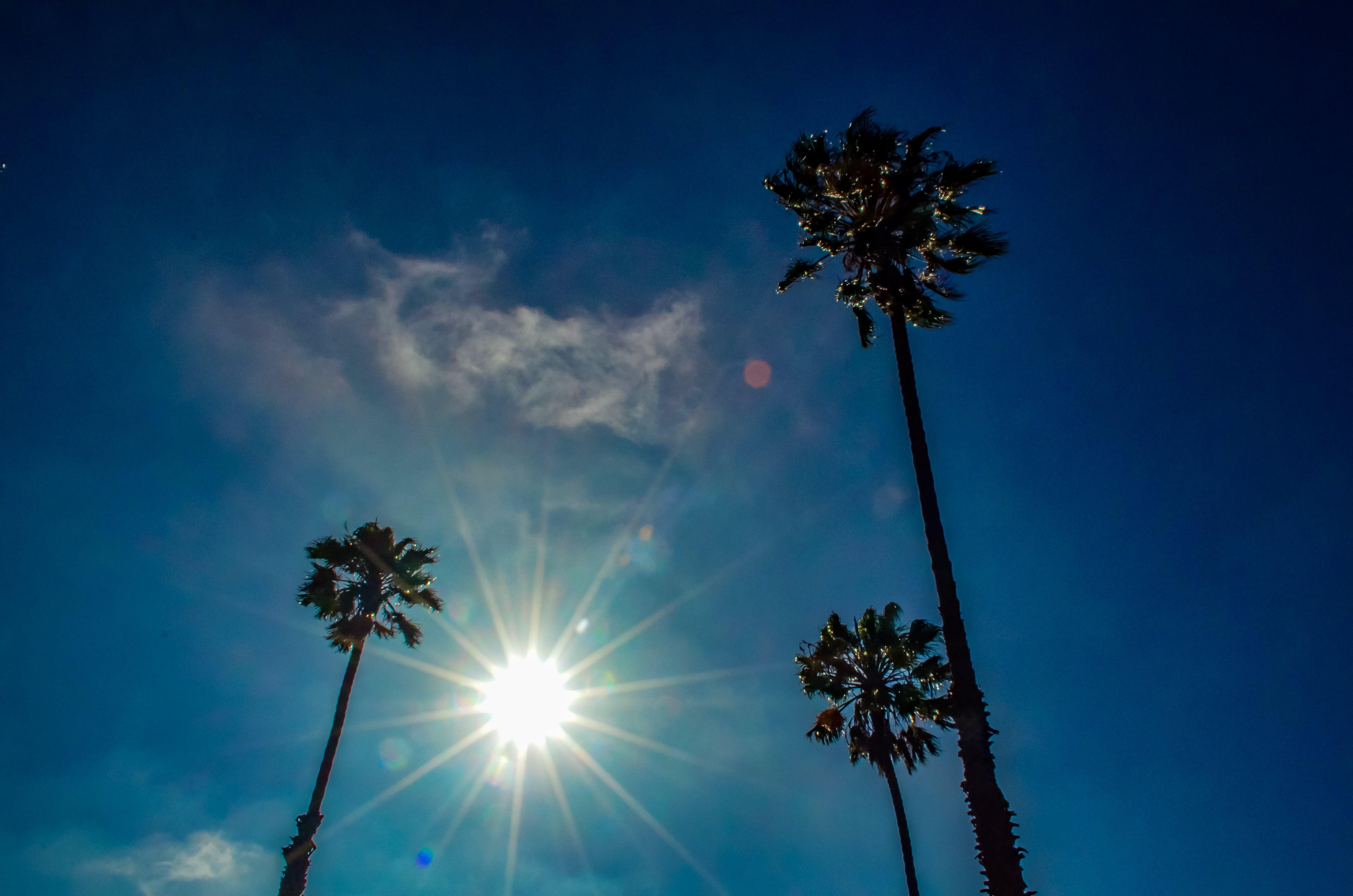 Palm trees under the sun