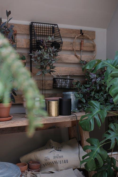 Základová fotografie zdarma na téma design interiéru, dřevo, dům