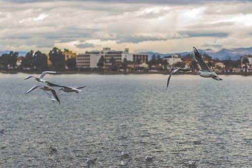 カモメ, 水, 海, 空の無料の写真素材
