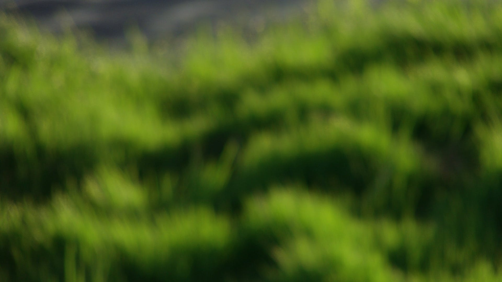 Kostenloses Stock Foto zu gras, grün, sonne, unscharf