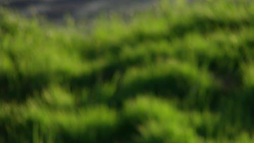 Fotobanka sbezplatnými fotkami na tému nejasný, rozmazanie, slnko, tráva
