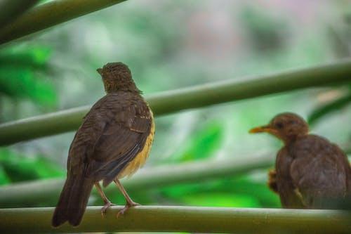 Ảnh lưu trữ miễn phí về chim, chim thành phố, ngắm chim