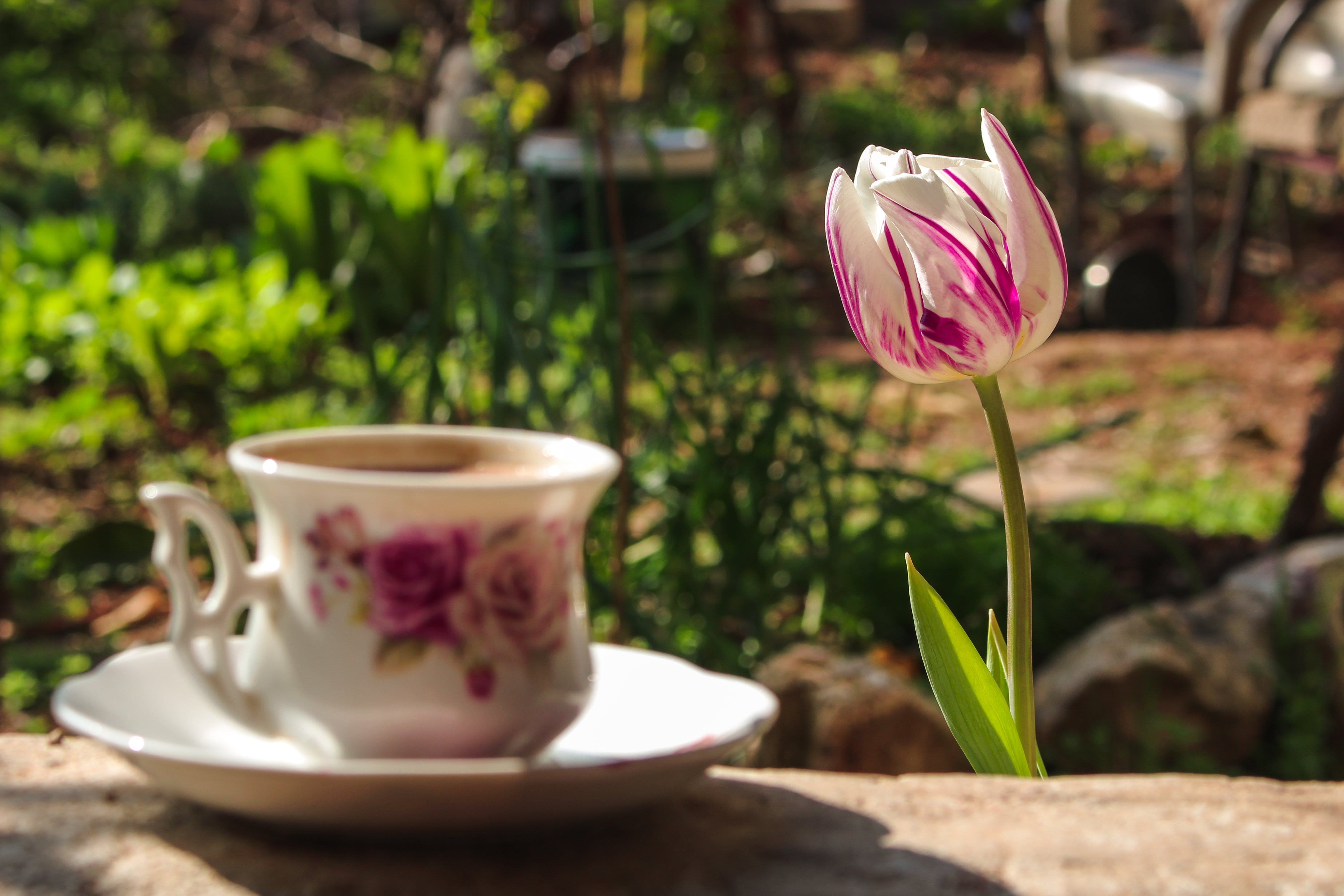 Free stock photo of artificial flowers, beautiful flowers, blossom, coffee