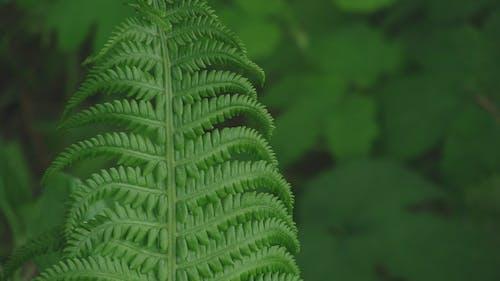 Fotobanka sbezplatnými fotkami na tému brzda, papraď, tráva, zelená