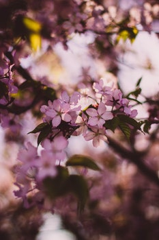 Kostenloses Stock Foto zu natur, blumen, äste, frühling