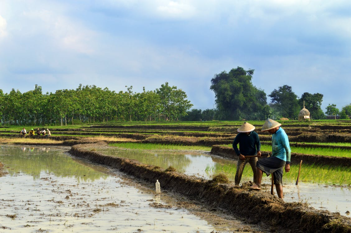 Free stock photo of farmer, farmers, farms