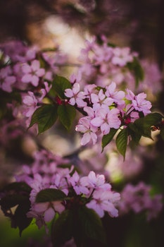 Free stock photo of nature, flowers, branches, petals