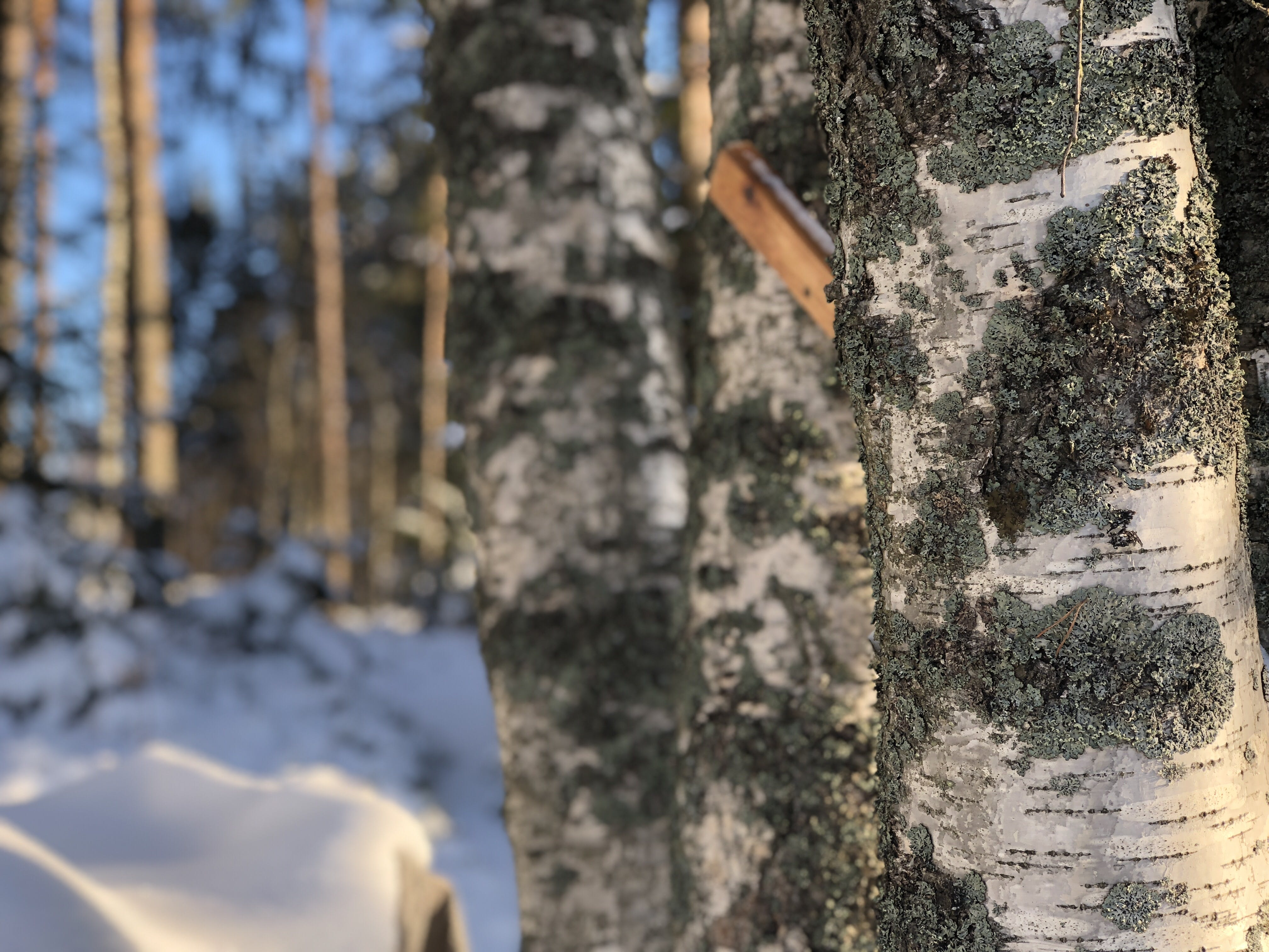Free stock photo of cold, Finland, forrest, snow