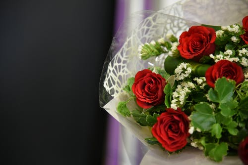Free stock photo of flower, flower background